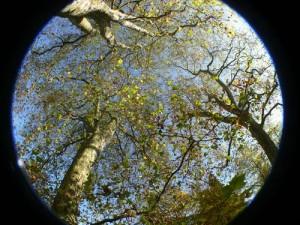 Schauen Sie sich die Abdunklungen an den Rändern an: Ein typisches Beispiel für ein Foto mit Zirkular-Effekt Foto: Günther Schad  / pixelio.de