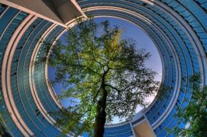 Der senkrechte Blick nach oben ist ein gern genutztes Stilmittel in der Kreativfotografie Foto: Michael Ottersbach  / pixelio.de