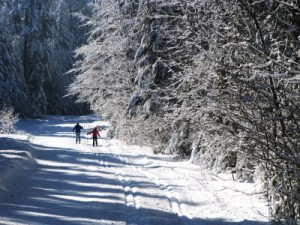 Langlauf-Loipen bieten die perfekte Möglichkeit, Sport- und Landschaftsfotografie zu verbinden Foto: Rainer Sturm  / pixelio.de